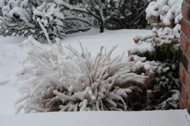Ice_storm_2006_001