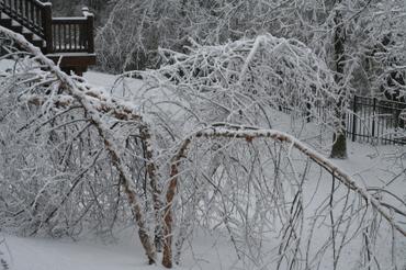 Ice_storm_2006_004